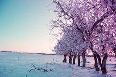 Χειμερινά τοπία Στοκ Εικόνα