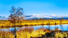 Χειμερινά χρώματα των τομέων αγροτών ` στο πόλντερ Pitt κοντά στην κορυφογραμμή σφενδάμνου στην κοιλάδα Fraser της Βρετανικής Κολ Στοκ εικόνες με δικαίωμα ελεύθερης χρήσης
