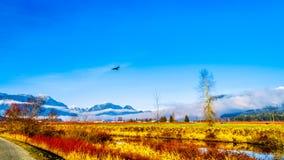 Χειμερινά χρώματα των τομέων αγροτών ` στο πόλντερ Pitt κοντά στην κορυφογραμμή σφενδάμνου στην κοιλάδα Fraser της Βρετανικής Κολ Στοκ φωτογραφία με δικαίωμα ελεύθερης χρήσης