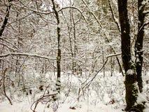 Χειμερινά Backwoods Στοκ εικόνα με δικαίωμα ελεύθερης χρήσης