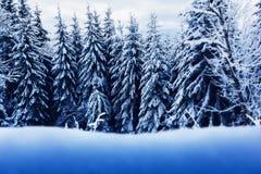 Χειμερινά fir-trees με το διάστημα Στοκ φωτογραφίες με δικαίωμα ελεύθερης χρήσης