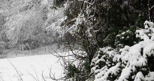 Χειμερινά snowflakes πτώση απόθεμα βίντεο