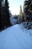 Χειμερινές δασικές διάθεση/λεπτομέρεια Στοκ εικόνα με δικαίωμα ελεύθερης χρήσης