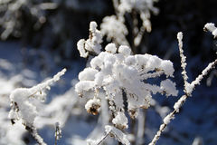 Χειμερινές δασικές διάθεση/λεπτομέρεια Στοκ φωτογραφία με δικαίωμα ελεύθερης χρήσης