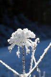 Χειμερινές δασικές διάθεση/λεπτομέρεια Στοκ εικόνες με δικαίωμα ελεύθερης χρήσης