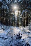 Χειμερινές δασικές διάθεση/λεπτομέρεια Στοκ Φωτογραφία