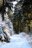 Χειμερινές δασικές διάθεση/λεπτομέρεια Στοκ Εικόνα