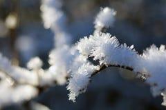 Χειμερινές δασικές διάθεση/λεπτομέρεια Στοκ φωτογραφίες με δικαίωμα ελεύθερης χρήσης