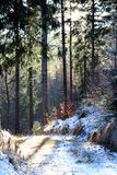 Χειμερινές δασικές διάθεση/λεπτομέρεια Στοκ Εικόνες