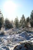 Χειμερινές δασικές διάθεση/λεπτομέρεια Στοκ Φωτογραφίες