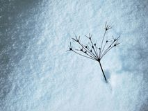 Χειμερινές εγκαταστάσεις Ξηρές άγριες εγκαταστάσεις στο χιόνι στοκ φωτογραφία με δικαίωμα ελεύθερης χρήσης