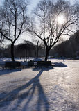 Χειμερινές ξηρές δέντρο και σκιά Στοκ φωτογραφία με δικαίωμα ελεύθερης χρήσης