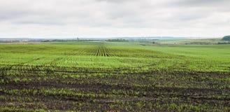 Χειμερινές συγκομιδές που φυτεύονται στις αγροτικές περιοχές Στοκ εικόνες με δικαίωμα ελεύθερης χρήσης