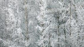 Χειμερινές χιονοπτώσεις