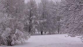 Χειμερινές χιονοπτώσεις απόθεμα βίντεο