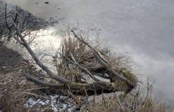 Χειμερινή λίμνη Andscape στις 25 Ιανουαρίου 2016 στη Sofia, Βουλγαρία Στοκ εικόνες με δικαίωμα ελεύθερης χρήσης