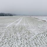 Χειμερινή αγροτική σκηνή με την ομίχλη και τους άσπρους τομείς Στοκ Φωτογραφίες
