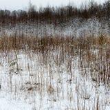 Χειμερινή αγροτική σκηνή με την ομίχλη και τους άσπρους τομείς Στοκ Εικόνα