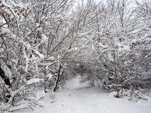 Χειμερινή αλέα που τρέχει μεταξύ των παγωμένων δέντρων στοκ εικόνες