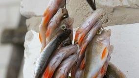 Χειμερινή αλιεία Αλιεία με τα κόκκινα πτερύγια που κρεμούν σε ένα σχοινί στη σειρά φιλμ μικρού μήκους