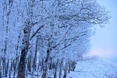 Χειμερινή ανατολή με την ομίχλη Στοκ φωτογραφίες με δικαίωμα ελεύθερης χρήσης
