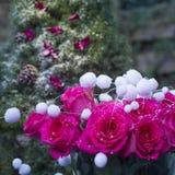 Χειμερινή ανθοδέσμη των ρόδινων τριαντάφυλλων και του Χριστούγεννο-δέντρου αναπνοής στο s Στοκ φωτογραφία με δικαίωμα ελεύθερης χρήσης