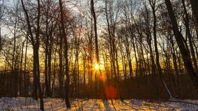 Χειμερινή δασική ανατολή απόθεμα βίντεο