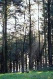 Χειμερινή δασώδης περιοχή Στοκ φωτογραφία με δικαίωμα ελεύθερης χρήσης
