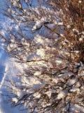 Χειμερινή βούρτσα Στοκ φωτογραφίες με δικαίωμα ελεύθερης χρήσης