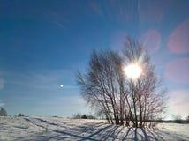 Χειμερινή γυμνή σημύδα Στοκ Εικόνα