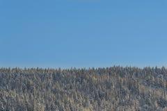 Χειμερινή δασική άποψη με το σαφή μπλε ουρανό στοκ φωτογραφία με δικαίωμα ελεύθερης χρήσης