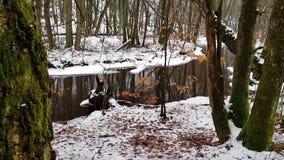 Χειμερινή δασική σκηνή Skaralid απόθεμα βίντεο