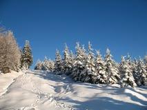 χειμερινή δασώδης περιο&chi Στοκ εικόνες με δικαίωμα ελεύθερης χρήσης