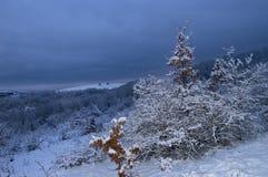 Χειμερινή εικόνα νύχτας Στοκ φωτογραφία με δικαίωμα ελεύθερης χρήσης