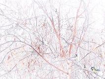 Χειμερινή εικόνα E E στοκ φωτογραφία με δικαίωμα ελεύθερης χρήσης
