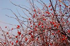 Χειμερινή εποχή στη χαμηλότερη Σιλεσία Στοκ εικόνα με δικαίωμα ελεύθερης χρήσης