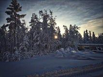 Χειμερινή ημέρα στο δάσος Στοκ Εικόνα