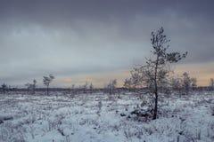 Χειμερινή ημέρα στο έλος Στοκ φωτογραφίες με δικαίωμα ελεύθερης χρήσης