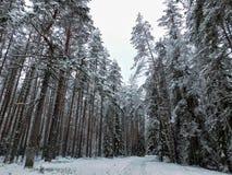 Χειμερινή ημέρα στο δάσος Στοκ Φωτογραφία
