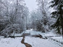 Χειμερινή ημέρα στο δάσος Στοκ εικόνα με δικαίωμα ελεύθερης χρήσης