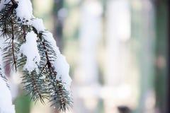 Χειμερινή κάρτα, μακρο λεπτομέρεια Στοκ Εικόνα