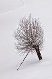 Χειμερινή μοναξιά Στοκ φωτογραφία με δικαίωμα ελεύθερης χρήσης