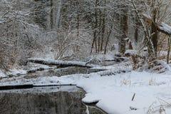 Χειμερινή νεφελώδης ημέρα και δασικός ποταμός Στοκ Εικόνες