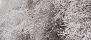 Χειμερινή δομή στη φύση Στοκ Φωτογραφίες