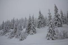 Χειμερινή ομίχλη Στοκ Φωτογραφίες