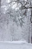 Χειμερινή ομορφιά έννοιας hardwood Τα γυμνά δέντρα που καλύπτονται με με το χιόνι στοκ εικόνες