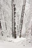 Χειμερινή ομορφιά έννοιας hardwood Τα γυμνά δέντρα που καλύπτονται με με το χιόνι στοκ φωτογραφία
