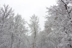 Χειμερινή ομορφιά έννοιας hardwood Τα γυμνά δέντρα που καλύπτονται με με το χιόνι στοκ φωτογραφίες