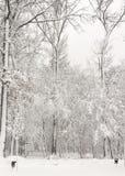 Χειμερινή ομορφιά έννοιας hardwood Τα γυμνά δέντρα που καλύπτονται με με το χιόνι στοκ εικόνα με δικαίωμα ελεύθερης χρήσης