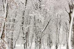 Χειμερινή ομορφιά έννοιας hardwood Τα γυμνά δέντρα που καλύπτονται με με το χιόνι στοκ εικόνα